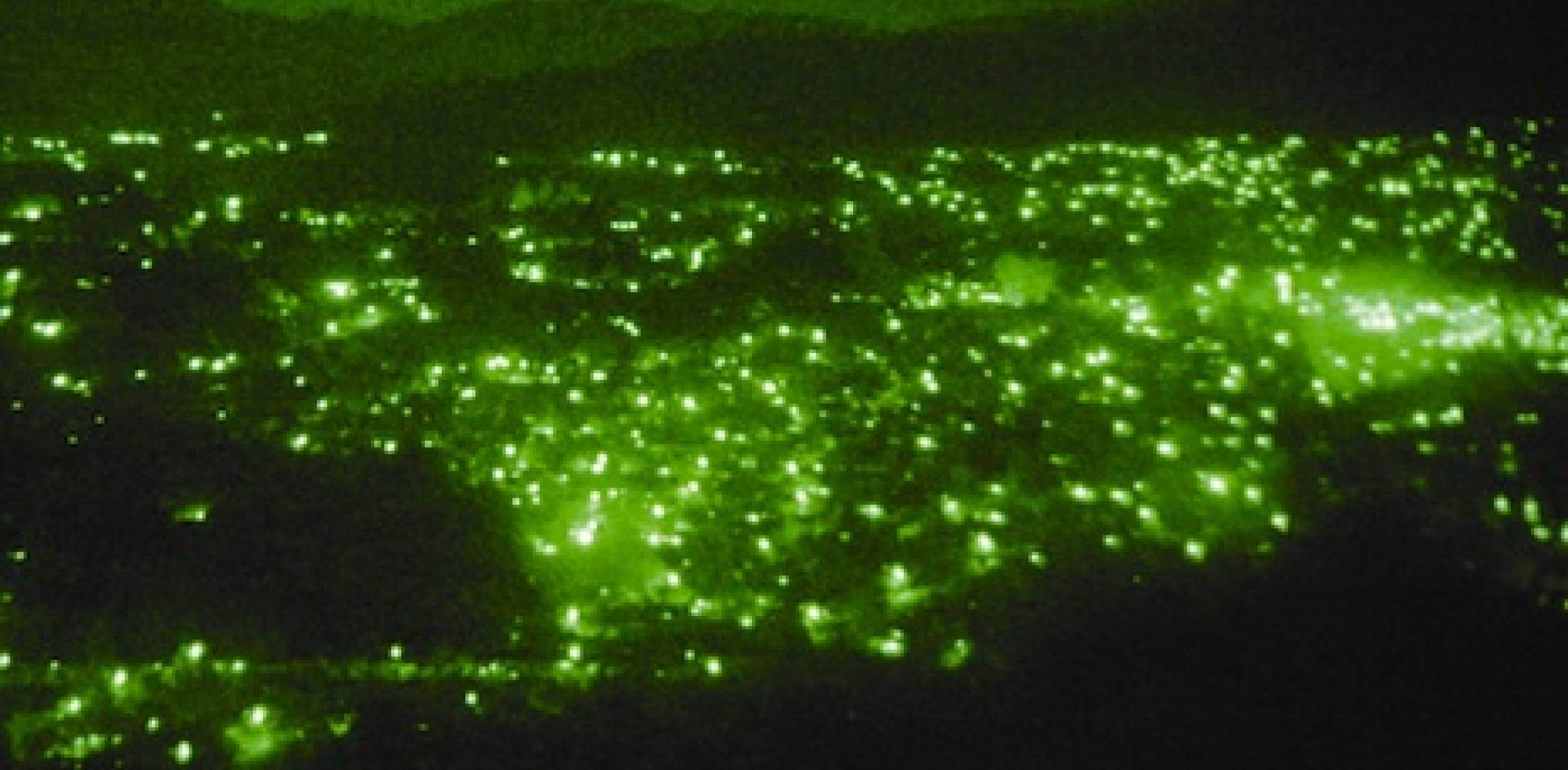 View from night vision goggles